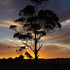 Sunset In Smithton by Lee Popowski