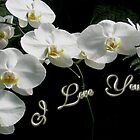 I Love You Greeting - White Moth Orchids by MotherNature2