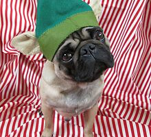 Green Puggy Pixie by ImogenSmid