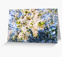 Blooming apple tree vintage Greeting Card