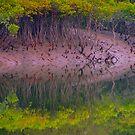 The Sundarbans by Denky