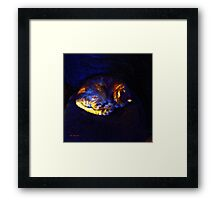 Stained Glass Snoozer Framed Print