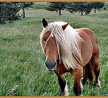 """"""" A Beautiful Palomino Horse"""" by mrcoradour"""