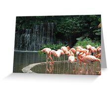 Chilean Flamingos Greeting Card