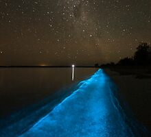 Bioluminescence under the Southern Sky by Phil Hart