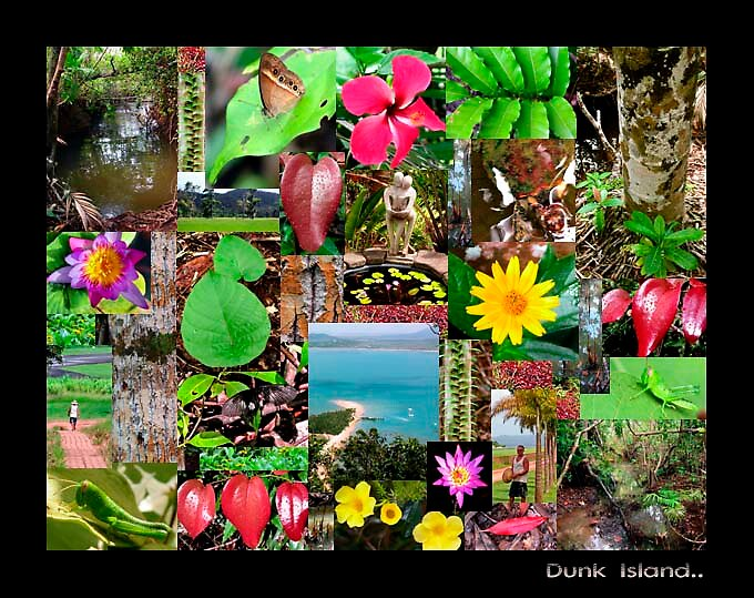 Dunk Island college colour nature by Lynette Higgs