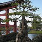 The Bansai Tree  by John  Kapusta