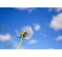 Beautiful dandelion Photographic Print