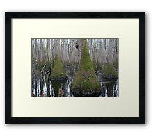 Tupelo Tree Swamp Framed Print