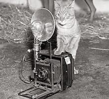 Cat with a Camera, 1936 by historyphoto