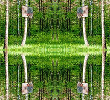 Basketball Forest Court Reflection 1 by Yevgeni Kacnelson
