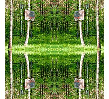Basketball Forest Court Reflection 1 Photographic Print