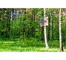Basketball Forest Court Photographic Print
