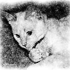 Kitten at Play - Pencil Sketch by Maria Schlossberg