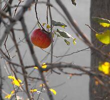 Last Apple of Autumn by ArianaMurphy