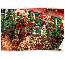 Roses Roses Lovely Flowers Poster