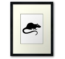 Black rat Framed Print