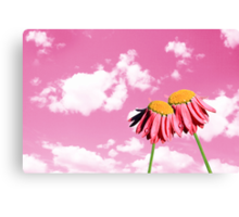 Camomiles beautiful on pink sky Canvas Print