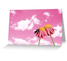 Camomiles beautiful on pink sky Greeting Card