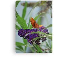 Purple Plains Metal Print