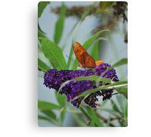 Purple Plains Canvas Print