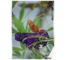 Purple Plains Poster