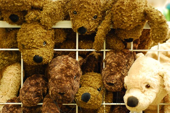 Cuddly Toys Behind Bars by Christopher Dunn