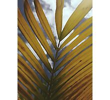 Palm Leaf Photographic Print