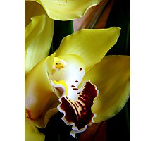 Close up on a Cymbidium Photographic Print