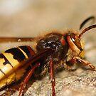 Wasp's bite by loiteke