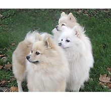 The three daughters of the Breed Record Holder Photographic Print