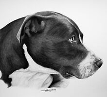 """Compassionate Gaze"" - Pit Bull mix Portrait by SD 2010 Photography & Equine Art Creations"