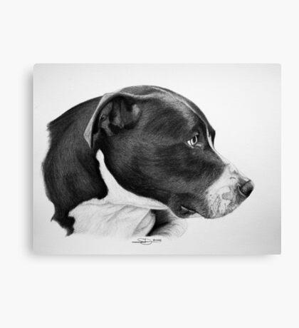 """""""Compassionate Gaze"""" - Pit Bull mix Portrait Canvas Print"""
