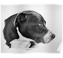 """""""Compassionate Gaze"""" - Pit Bull mix Portrait Poster"""