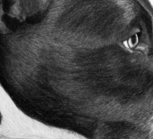 """Compassionate Gaze"" - Pit Bull mix Portrait Sticker"