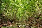 Wild forest in Massif des Bauges Natural Park by Patrick Morand