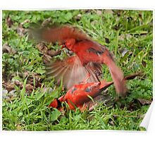 Fighting Cardinals  Poster