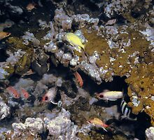 Colorful Fish on a Coral Reef  by Tex Smock