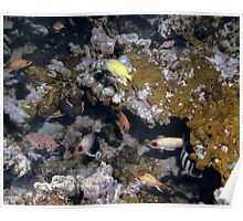 Colorful Fish on a Coral Reef  Poster