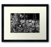 Forest socket Framed Print
