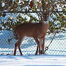 My Backyard Visitor by JBendeth