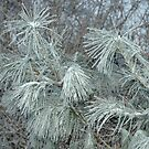 Frosty Transformation by Paul Gitto