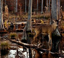 Next Season: Swamp Whitetail by J Leslie  Booth