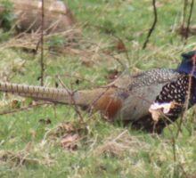 Male Pheasant Sticker