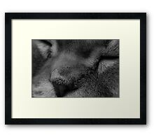 Macro Deep Chilling Framed Print