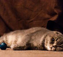 Chillcat by Yevgeni Kacnelson
