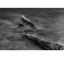 Flowing through the Spirit of Trees Photographic Print