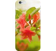 Rhododendron or Azalea Il Tasso flowers iPhone Case/Skin