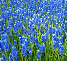 A Sea of Blue by ienemien