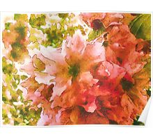 Pale Pink Blossoms Poster